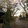 本丸_桜の花道
