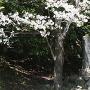 桜の下の城址碑