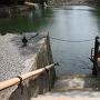 鯛が泳ぐ水堀