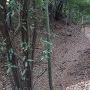 本丸跡~二の丸跡の空堀