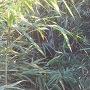 笹で埋もれた「土橋」の標柱