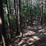 登城路の尾根道