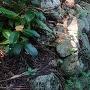 桜洞城 石垣