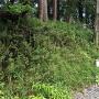 掛川城 黒土塁