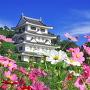 秋桜と旭城 '19