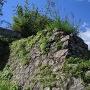 陣屋跡の石垣