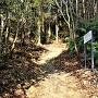 本丸南側登山道