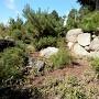 虎口の石垣跡