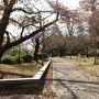 二の丸桜並木