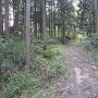 林道天王線本線と支線の合流点