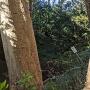 生実神社の土塁と空堀