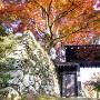 本丸門と紅葉
