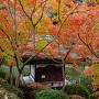 西之丸庭園の紅葉