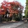 蜂須賀城碑