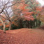 小川城 紅葉の絨毯