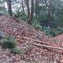 西の丸跡の竪堀