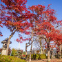 霞ケ城公園の紅葉