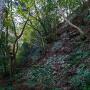 北の丸下の石垣