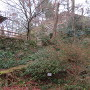 花明山植物園側から本丸杉櫓跡