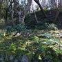 百済寺庭園の築山