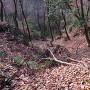 太尾山城 南城北の竪堀
