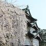 櫓と石垣と桜