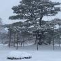 【兼六園】積雪の根上松
