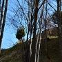 登城道より主郭跡を見上げる