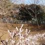 大倉山公園北側