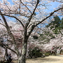 春の郡山公園[提供:安芸高田市観光協会]
