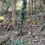 本城(新城)跡近くの石垣