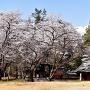 本丸跡 (藤武神社)
