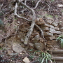 本丸北側斜面の石積