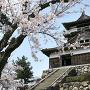 春の天守[提供:丸岡城桜まつり振興会]