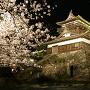 春の夜の天守[提供:丸岡城桜まつり振興会]