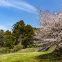 御屋敷跡の桜と土塁