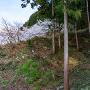 本城曲輪から北へ湖畔展望園路まで落ちる竪堀の基部