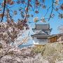 桜に包まれる備中櫓