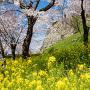 春爛漫の津山城