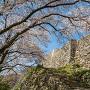 桜と二の丸の石垣