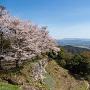 山上の丸二の丸の桜
