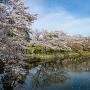 春の鹿野城