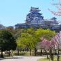 改修前の姫路城天守をシロトピア記念公園から[提供:姫路市]