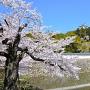 桜と三国堀と大天守(改修前)[提供:姫路市]