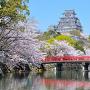 城見橋からの桜と大天守(改修前)[提供:姫路市]