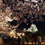 夜桜とライトアップされた天守(改修前)[提供:姫路市]