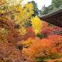 書写山円教寺の紅葉[提供:姫路市]