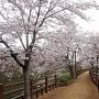 千姫の小径[提供:姫路市]