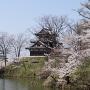 三重櫓と桜