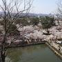 三重櫓からの景色(春)